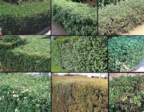 LOS SETOS   Setos, Jardines, Plantas