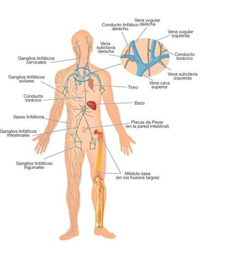 Los Sistemas del Cuerpo Humano y sus Funciones Vitales