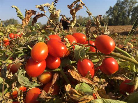 Los talones de Aquiles de la agricultura española