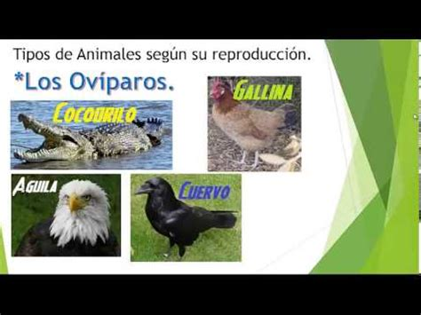 Los tipos de Animales por su Alimentacion y por su ...