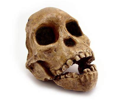 Los últimos descubrimientos arqueológicos   Curiosidades