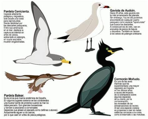 Los vigilantes de aves marinas | Baleares | EL MUNDO