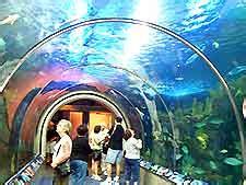 Louisiana Aquariums Coupons Review: A very educational ...