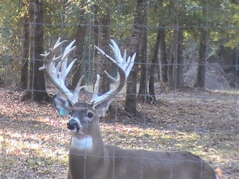 Louisiana Trophy Whitetail Petting Zoo for you or your ...