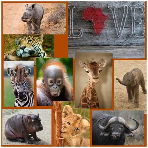 Love Africa ️   Animals friends, Animals and pets, Animals