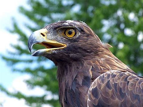 Love: Raptor Bird