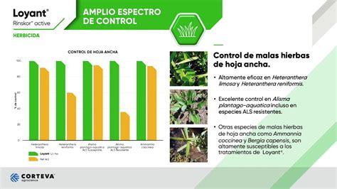 Loyant, eficaz para el control de malas hierbas de hoja ...