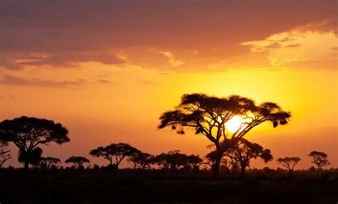 Luna de miel en Kenia: pasión en la joya de África