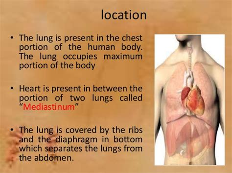 Lung and lung cancer symptoms   an overview