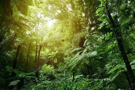 Luz solar na selva — Stock Photo  stillfx #180814140
