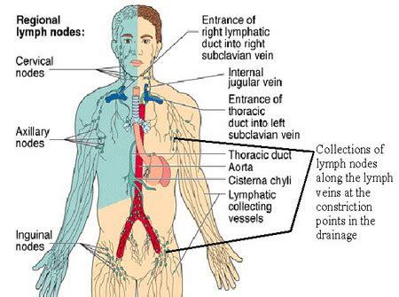 Lymph Node Locations   Neck, Groin, Ear, Diagram, Pictures ...