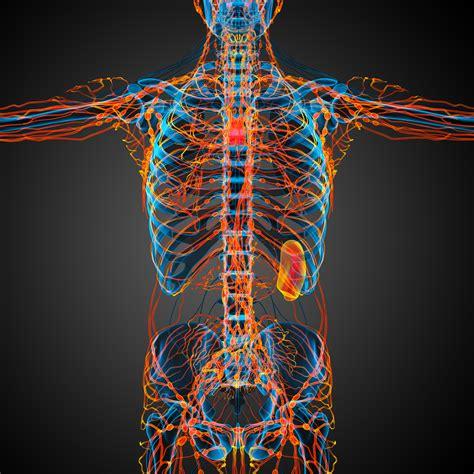 Lymph Node Metastasis Predicts Worse Survival in Cervical ...