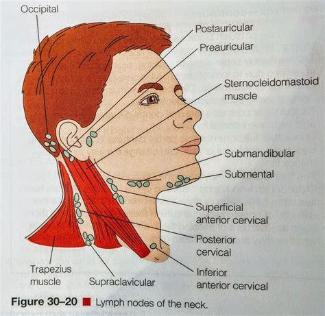 Lymph Nodes  Head & Neck | Anatomía, Odontología