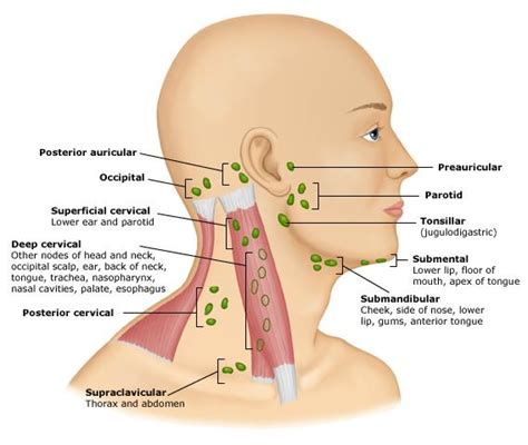 Lymph Nodes | Thyroid Trouble