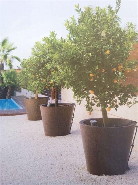 Macetas con árboles frutales para una terraza | Arboles ...