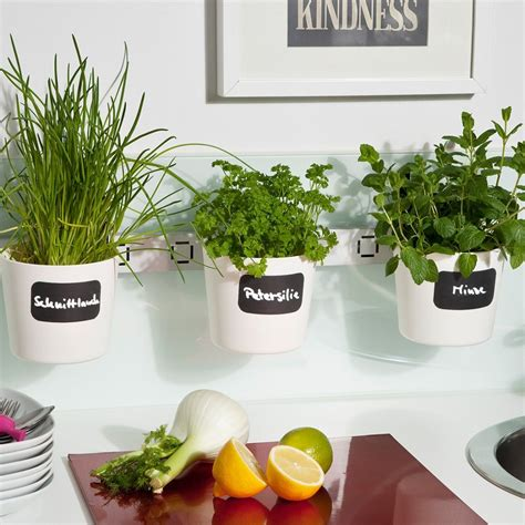 Macetero de ventana para hierbas aromáticas | Plantas para ...