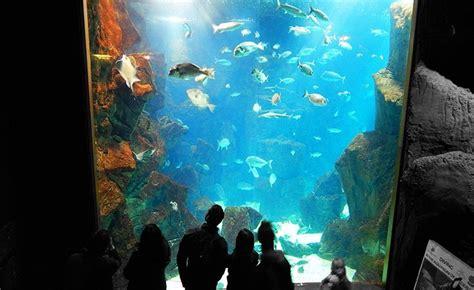 Madeira Aquarium in Porto Moniz   KASADOO