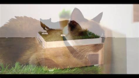 Maderkit   Línea Pets Mascotas   YouTube