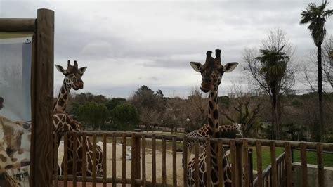 Madrid 2019. Zoo Aquarium de Madrid   YouTube