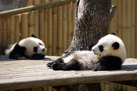 Madrid Zoo. Apartamentos Madrid por días | g3 Galeón Web ...