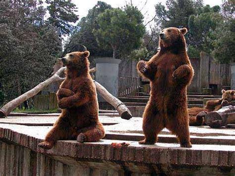 Madrid Zoo, Madrid, Spain | Bucket | Pinterest