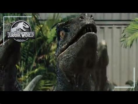 Making Raptor Sounds   YouTube