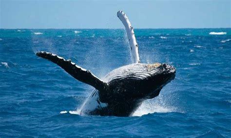 Mamíferos marinos   BioEnciclopedia