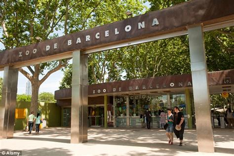 Man who was mauled by lion at Barcelona zoo pictured ...