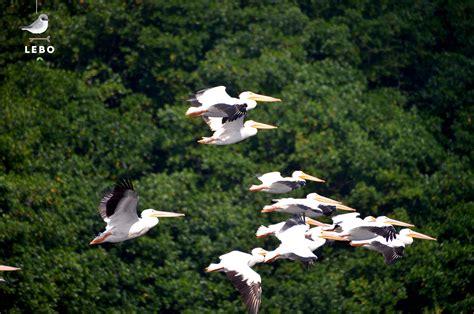 Manglar, hogar de las aves migratorias | Comisión Nacional ...