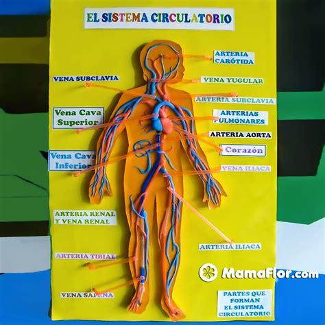 Maquetas del Sistema Circulatorio Fáciles   Manualidades ...