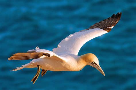 Mar Cantábrico: Aves marinas