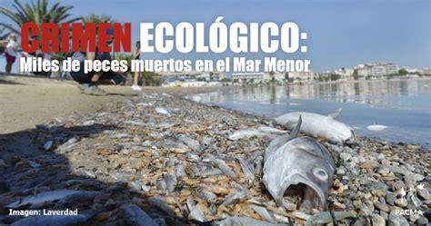 Mar Menor: la recuperación del ecosistema va a ser muy lenta
