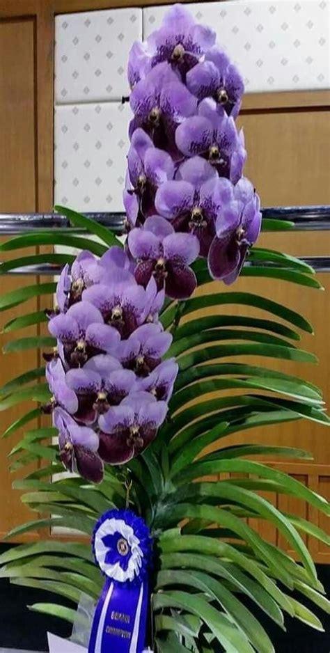 Maria Catalan   Google+ | Редкие орхидеи, Экзотические ...