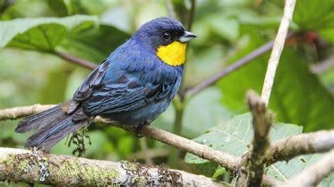 Más de 200 aves deberían entrar en la Lista Roja de ...