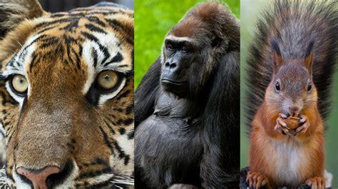 Más de 500 especies de animales vertebrados terrestres en ...