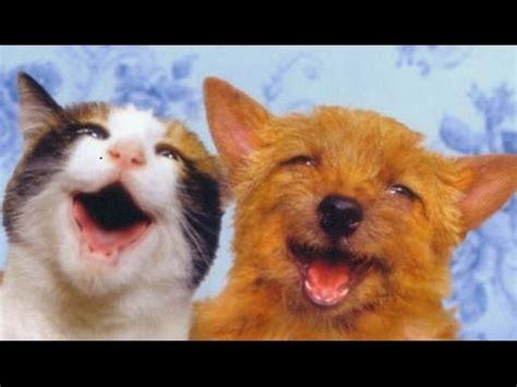Mascotas Graciosas y Tiernas Mascotas Asombrosas Mascotas ...