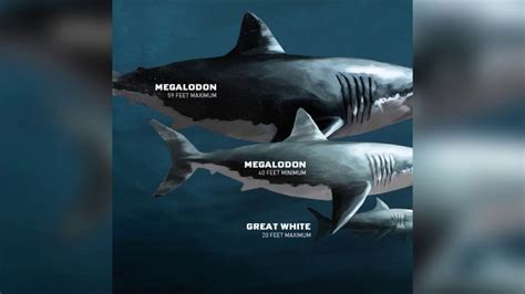 Massive Deep Sea Shark  30 50 Feet  Megalodon?   YouTube