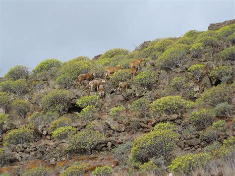 Matorral de costa | Reserva de la Biosfera de La Gomera