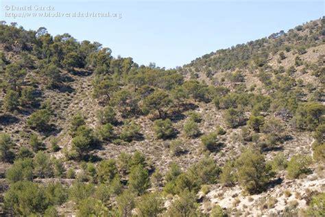 Matorral esclerófilo mediterraneo.   5101   Biodiversidad ...