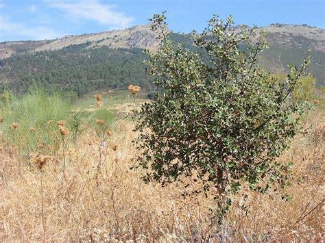 matorral mediterraneo flora   Buscar con Google | Natural ...