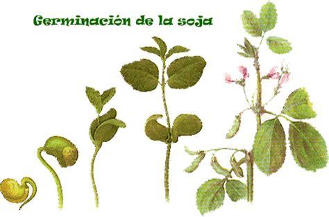 Medicina Vida y Salud: las propiedades de la soja
