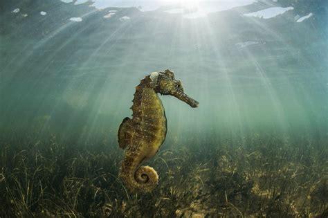 Medio Ambiente edita un libro de fotografía de la fauna y ...
