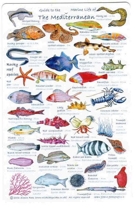 mediterranean fish names   Google Search | FOOD OF OUR SEA ...