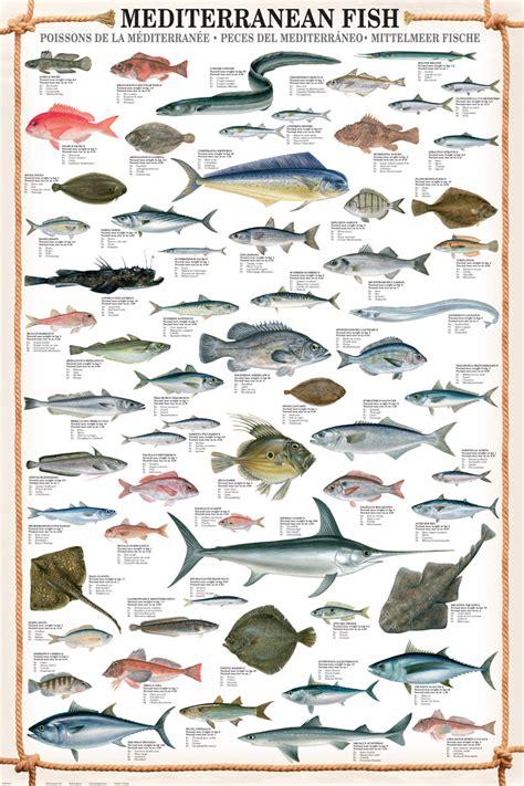 Mediterranean Fish, Poster at Eurographics
