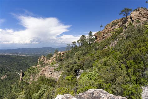 Mediterranean forest area on the rise but increasingly in ...