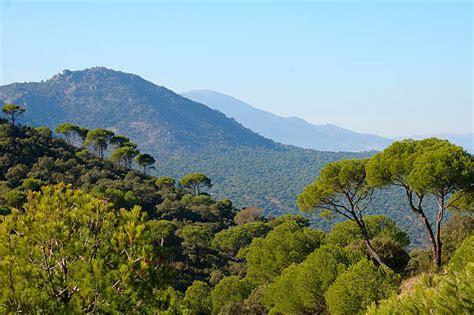 Mediterranean Forest   Banco de fotos e imágenes de stock ...