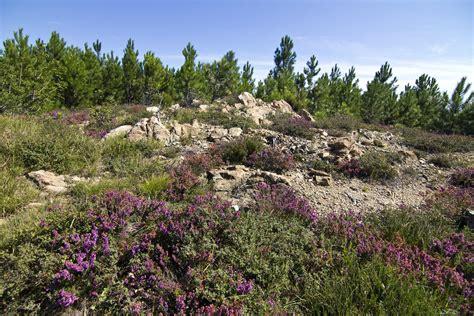 Mediterranean vegetation #1   Varazze, Madonna della ...