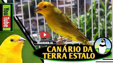 MELHOR canto PARA ENCARTAR canário DA TERRA!   YouTube