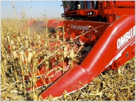 Mercado Rosario: mejoraron los valores de compra por maíz ...