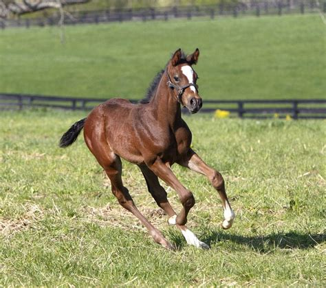 Merck Animal Health Presents Foals Of 2015: Town And ...